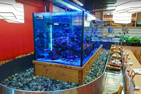 live reef aquarium at Sushi Hi Restaurant, Airlie Beach, Whitsunday Region, Australia